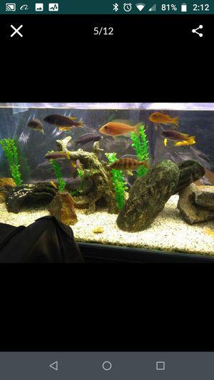Fish Tank Aquarium Props Decor for Sale in Arcadia, CA