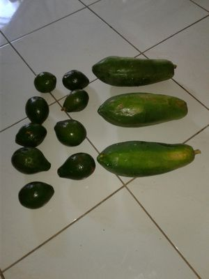 organic papayas, avocados for Sale in Fort Lauderdale, FL