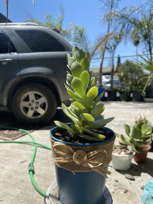 Succulent arrangement for Sale in Tulare, CA