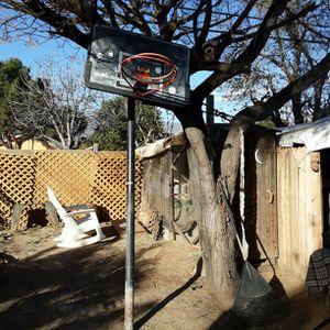 Basketball Hoop Ajustable From Beginner To NBA for Sale in San Bernardino, CA