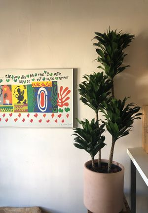 Plant low maintenance for Sale in Los Angeles, CA
