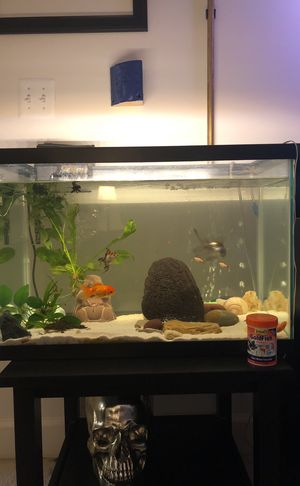 Fish tank 🐠 🐟 20g with fishes for Sale in Fairfax, VA