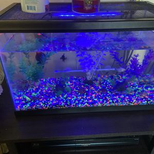 Fish Tank for Sale in Campbell, CA