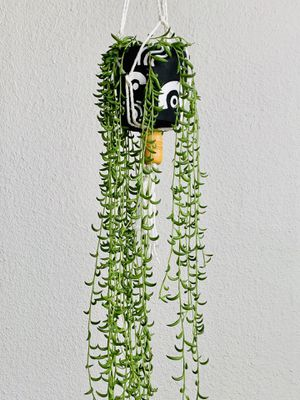 Hanging String Of Bananas Plant for Sale in Los Angeles, CA