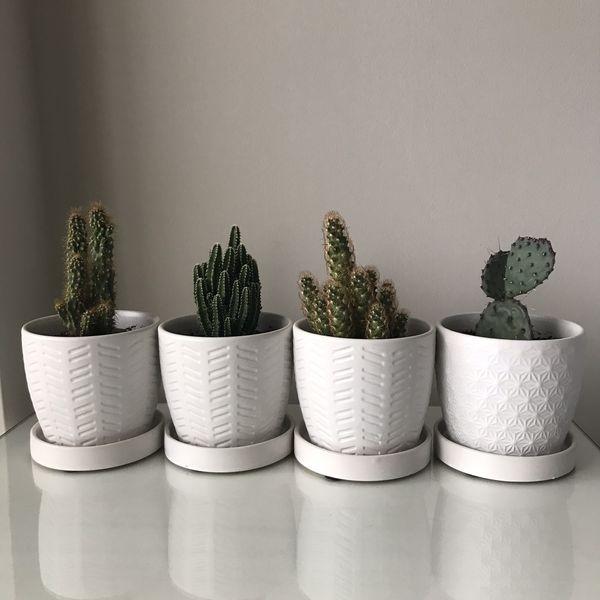 Succulent/ Cactus
