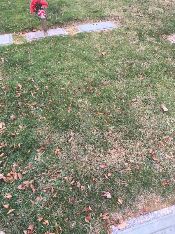 Parklawn Memorial Park Cemetery Plots