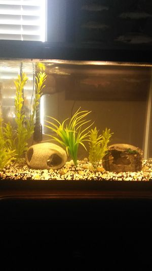 20 Gallon Fish Tank for Sale in American Canyon, CA