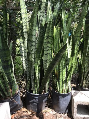 Plants for Sale in DeBary, FL