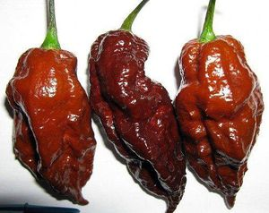 Chocolate Bhutlah rare super hot pepper plants for Sale in San Antonio, TX