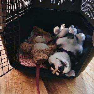 Dog Crate (dog not included) for Sale in Seattle, WA