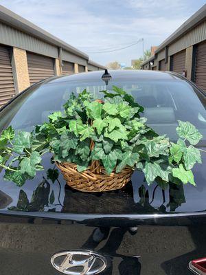 Ivy arrangement for Sale in Manassas, VA