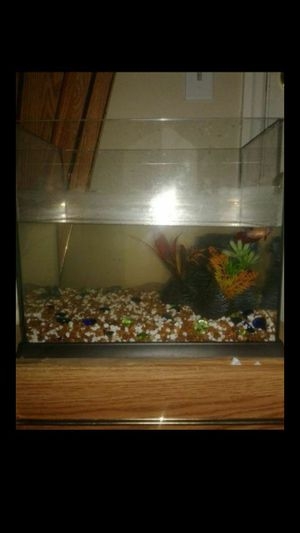 Fish tank for Sale in TN, US