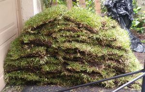 Sod for Sale in Fort Lauderdale, FL