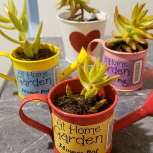 Valentine's day Succulents for Sale in South Gate, CA