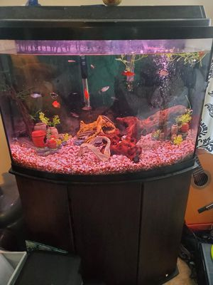 Complete 36 gallon set up for Sale in Virginia Beach, VA