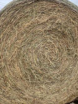 Coastal Hay for Sale in Anna,  TX