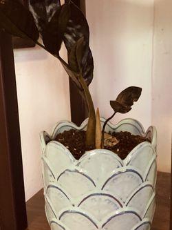 Plant In Pot for Sale in Dearborn,  MI