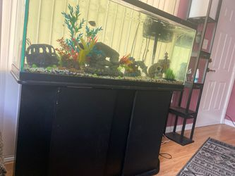 55 gallon tank with stand and fish included for Sale in Indianapolis,  IN