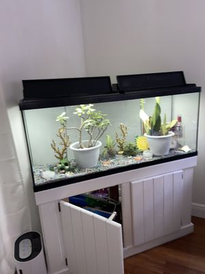 Large fish tank with white wood stand (items shown included) for Sale in Indialantic, FL