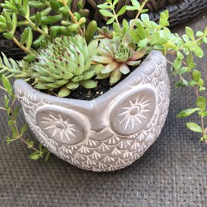 Owl succulent garden for Sale in Tacoma, WA