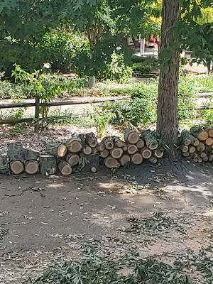 Firewood FREE for Sale in Charlotte, NC