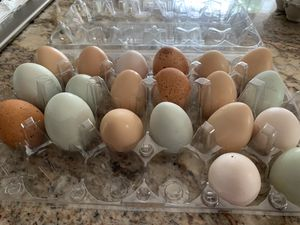 Egg layers for Sale in Lynnwood, WA