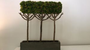 Topiary tree decor for Sale in Bradenton, FL