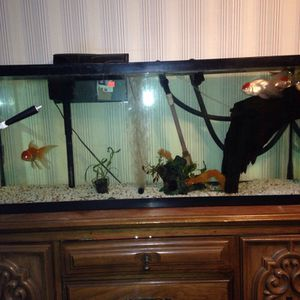 Fish Tank Maintenance and Setup Services for Sale in Maynard, MA