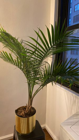 Palm tree with pot for Sale in New York, NY