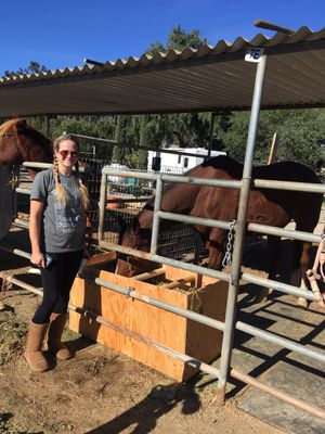 Custom Horse feeders for Sale in Poway, CA