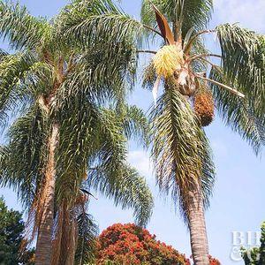 🌴🌴🌴🌴🌴🌴🌴🌴🌴🌴🌴🌴🌴🌴🌴🌴🌴🌴🌴🌴🌴🌴🌴🌴🌴🌴🌴🌴🌴🌴🌴🌴🌴🌴 for Sale in Chula Vista, CA