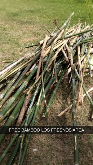 FREE BAMBOO MPU LOS FRESNOS for Sale in Los Fresnos, TX