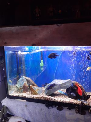 Fish tank for Sale in National City, CA