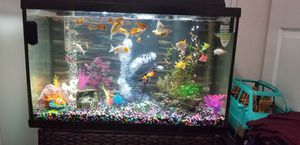 Fish tank (Pecera) 30 gallons for Sale in Hialeah, FL