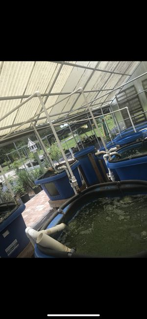 Nelson made Aquaponics system! for Sale in Vero Beach, FL