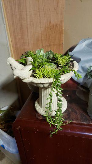 Succulent arrangement for Sale in Rochester Hills, MI