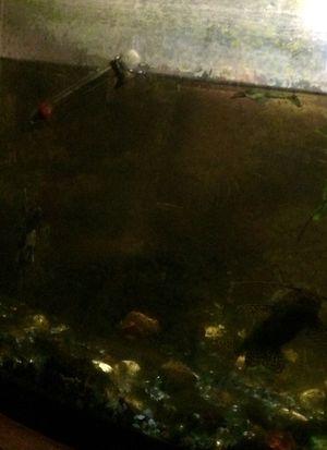 35 gal aquarium $75.00 for Sale in Washougal, WA