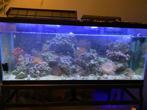 Fish tank with everything in it for sale for Sale in Framingham, MA