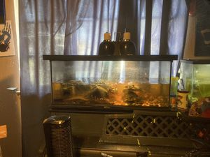Turtle tank with 3 turtles included for Sale in Fresno, CA