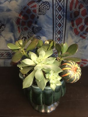 Tulip hull planter with live Succulents for Sale in Strongsville, OH