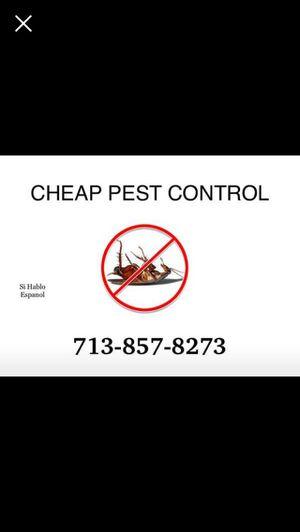 Termites for Sale in Houston, TX