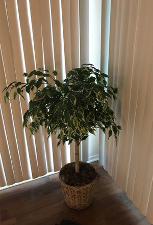 Fake plant for Sale in Sandy Springs, GA