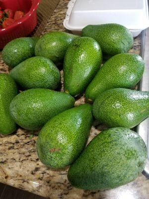 Avocados/aguacates for Sale in Rialto, CA