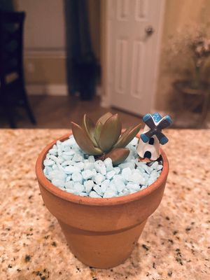 Mini succulent garden for Sale in Pearland, TX
