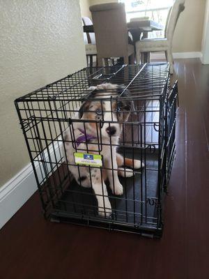 Small dog crate for Sale in MAGNOLIA SQUARE, FL