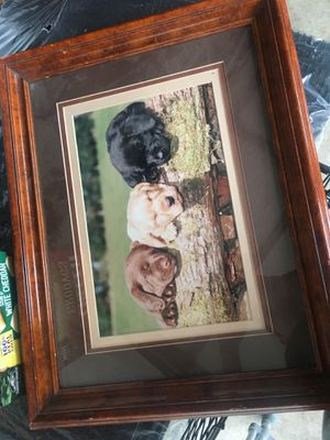 Dog picture for Sale in Carnation, WA