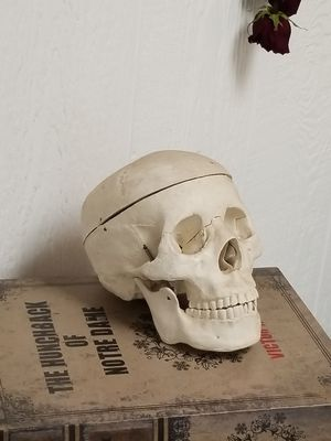 anatomical studies resin cranium for Sale in Glendale, AZ