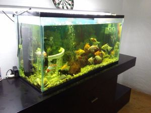 fishbowl for Sale in Boston, MA