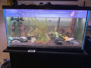 EVERYTHING INCLUDED 60 gallon tank for Sale in Fort Worth, TX