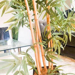 Tall Bamboo Silk Plant. $45.00 Moving for Sale in Boynton Beach, FL